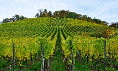 Simuliamo un'azienda vinicola